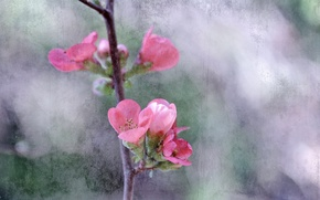 Picture flowers, tree, branch, spring, garden, canvas