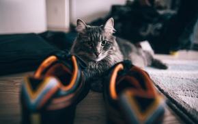 Picture cat, shoes, sneakers, CROs, Kote, krasovki