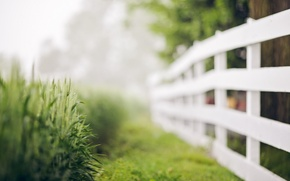 Picture grass, background, the fence
