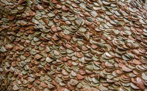 Picture wall, coins, a lot
