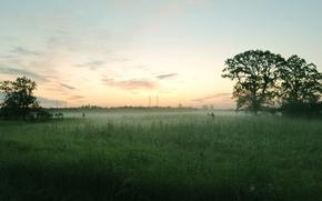 Wallpaper fog, trees, field