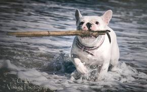 Picture sea, dog, stick, GJ-Vernon