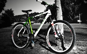 Picture tree, Bike, black-and-white background