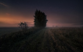 Wallpaper field, night, fog