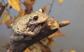 Picture autumn, branch, toad, reptile