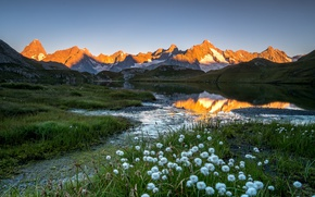 Picture light, flowers, mountains, lake