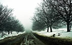 Picture winter, road, snow, haze, traveler
