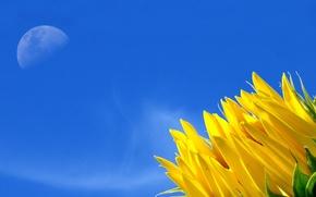 Wallpaper yellow, the sky, flower