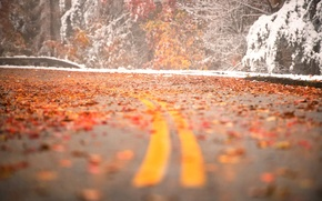 Picture road, leaves, snow, turn