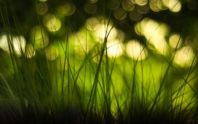 Wallpaper bokeh, macro, glare, grass