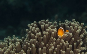 Picture eyes, fish, the bottom of the sea, marine life, sea anemones