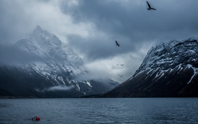 Picture mountains, birds, Norway, Bay, Bakin