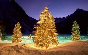 Picture winter, light, night, tree, backlight