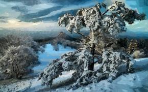Wallpaper winter, forest, snow, trees, landscape