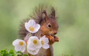 Picture flowers, nature, protein