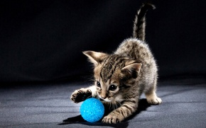 Picture kitty, eyes, ball, plays