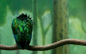 Wallpaper Branch, Feathers, green, Bird