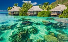 Wallpaper sea, beach, tropics, palm trees, houses, summer, sunshine, beach, sea, ocean, paradise, vacation, palms, tropical, ...