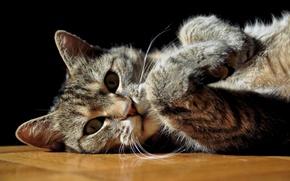 Picture cat, cat, grey, lies, striped