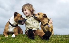 Picture summer, mood, dog, boy, child