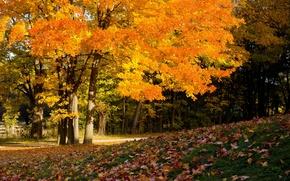Picture trees, foliage, autumn colors, autumn ahead, cover