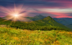 Picture greens, field, grass, the sun, trees, sunset, mountains, nature, the evening, slope