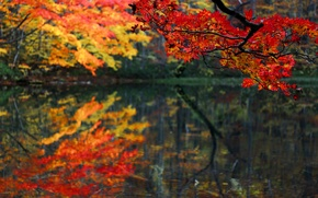 Picture autumn, forest, leaves, lake, pond, branch