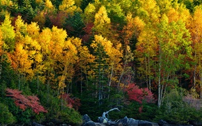 Picture autumn, forest, trees, lake, stones, slope