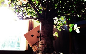 Picture macro, light, photo, Wallpaper, plant, man, picture, boxed, DANBO