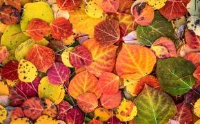 Wallpaper autumn, paint, foliage, macro