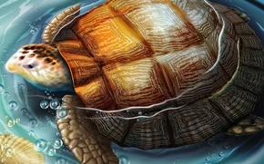 Wallpaper figure, water, turtle
