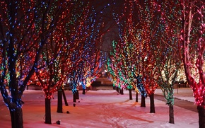 Picture garland, colorful, snow, holidays, nature, winter, road, trees, lights, lights, night, alley, branches, traces