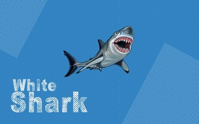 Wallpaper shark, pop art, white, blue