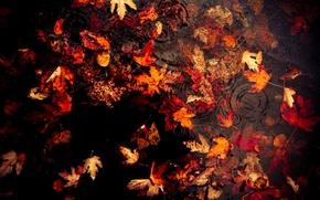 Picture autumn, leaves, rain