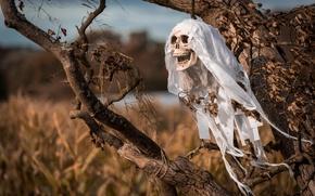 Picture tree, skull, Halloween, Halloween