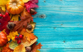 Picture berries, tree, harvest, acorns, pumpkin, autumn, leaves