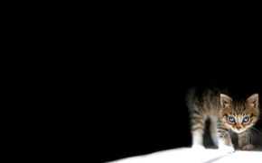 Picture darkness, small, kitty