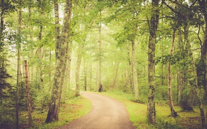 Picture green, forest, road, trees, sunrise, sunlight