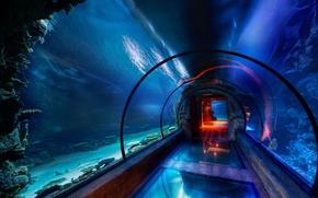 Wallpaper water, Aquarium, pass