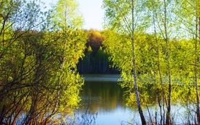 Wallpaper trees, lake, spring, nature