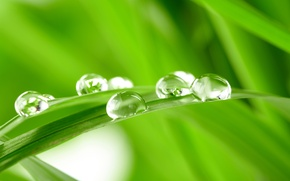 Picture GRASS, ROSA, WATER, SPHERE, DROPS, GREEN, GREEN, A BLADE of grass