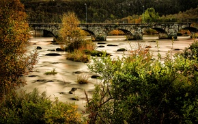 Picture forest, trees, bridge, river, stones, moss, Norway, lights, the bushes, Egersund