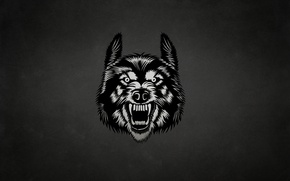 Wallpaper face, the dark background, wolf, wolf