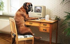 Wallpaper Computer, table, bulldog, porn