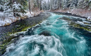 Picture forest, snow, trees, river, stream