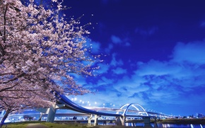 Picture bridge, river, tree, Japan, lights
