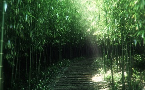 Wallpaper path, art, nature, bamboo, thickets, the sun's rays, trail