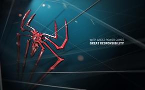 Picture spider-man, web, spider, spider, Spider-Man, The Amazing Spider-Man, New spider-man