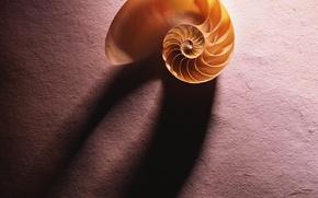 Wallpaper shell, shadow, paper