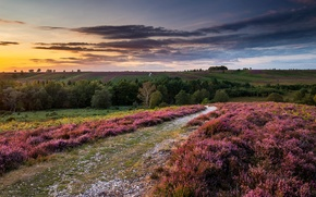Picture the sky, clouds, trees, landscape, sunset, flowers, nature, hills, field, England, UK, Heather